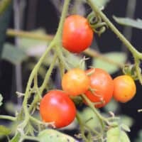 Home Garden | paleoscaleo.com