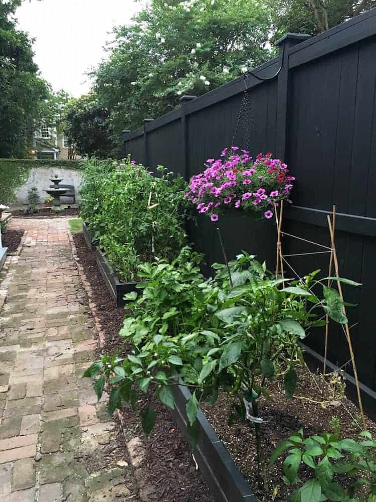 Vegetable Garden June5