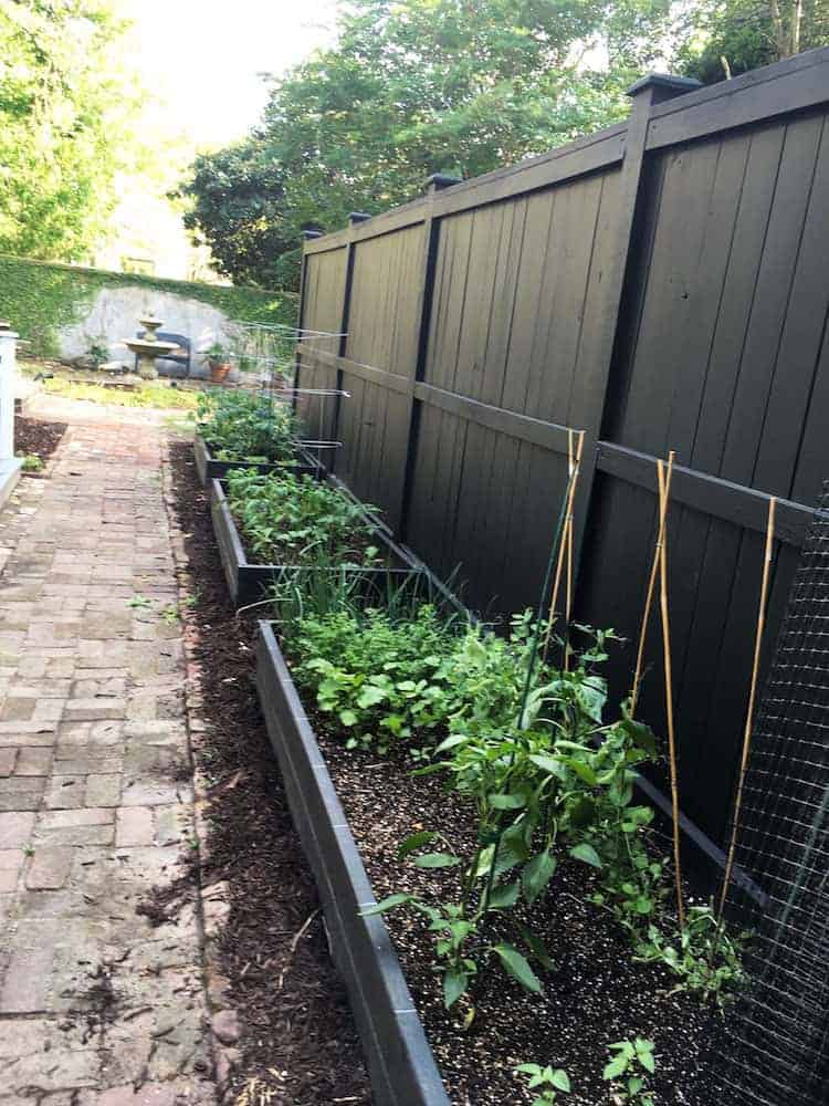 Vegetable Garden May6
