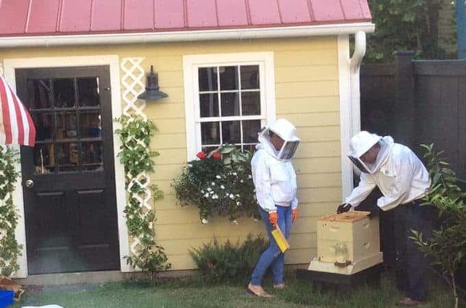 beekeepers with backyard beehive