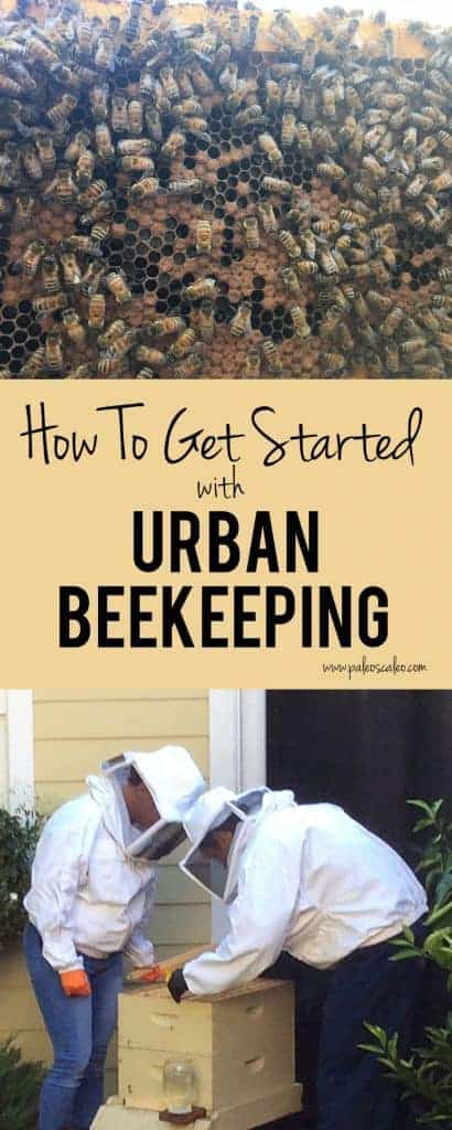 Keeping bees is easier than you think! This post has 5 tips on things to remember when getting started with beekeeping in an urban environment. | PaleoScaleo.com